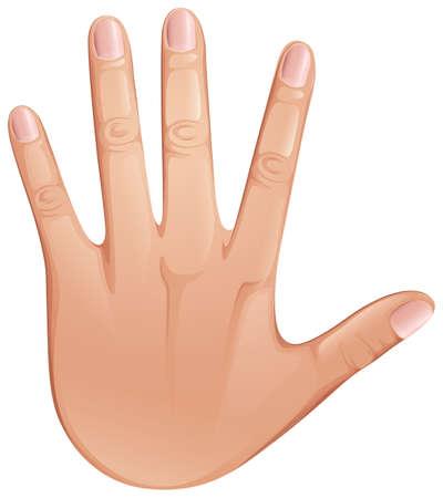 nails: Illustration of a close up human hand