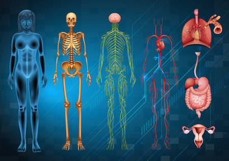 Various human body systems and organs 일러스트