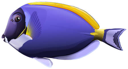 tang: Flashcard of a powder blue tang fish