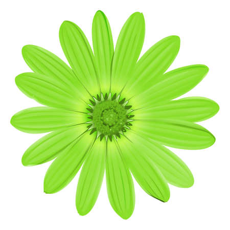flower close up: Illustration of a green flower