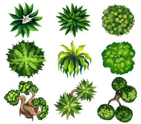 arboles frondosos: Topview de las diferentes plantas sobre un fondo blanco Vectores