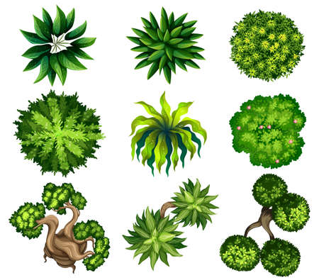 birdseye view: Topview of the different plants on a white background