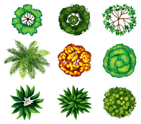 birdseye view: A topview of a group of plants on a white background