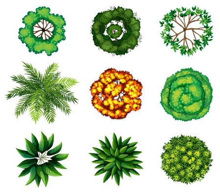 Eine Draufsicht auf eine Gruppe von Pflanzen auf einem weißen Hintergrund