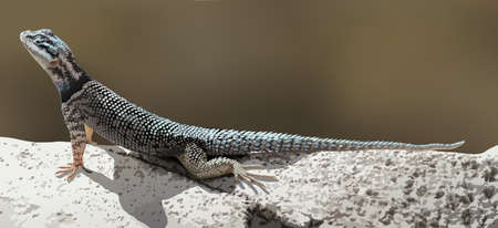 blooded: A lizard crawling