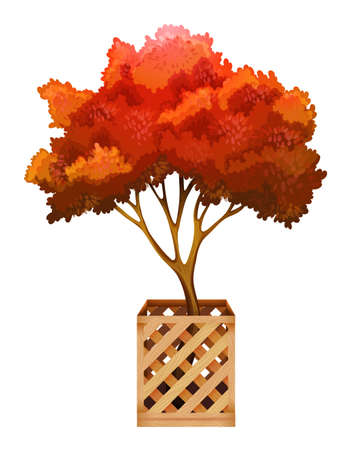 conifers: A plant with a wooden container on a white background