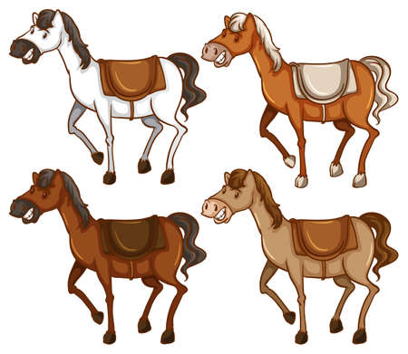 ungulate: Four horses on a white background