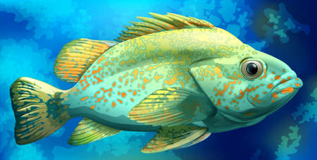 ectothermic: A fish under the sea Illustration