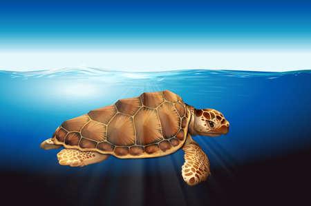 omnivorous: A sea turtle swimming