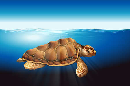 large turtle: A sea turtle swimming