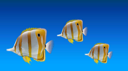 ectothermic: Butterfly fishes under the sea