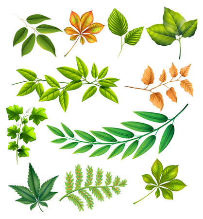 Different leaves on a white background Vector
