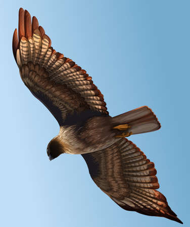 mobbing: A hawk flying in the sky