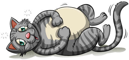 crepuscular: A fat gray cat on a white background