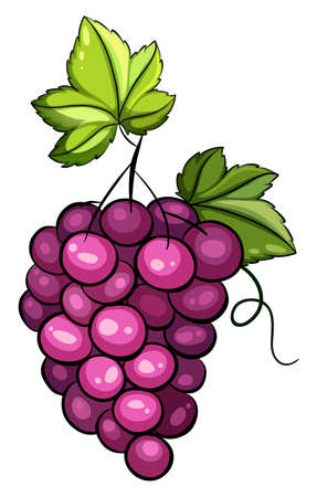vitis: A cluster of grapes on a white background