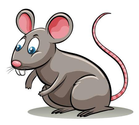 rata: Modismo la parte del le�n en un fondo blanco