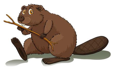 castor: Un castor impaciente en un fondo blanco