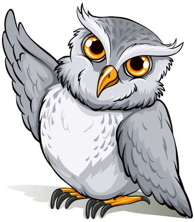 mobbing: Wise owl on a white background Illustration