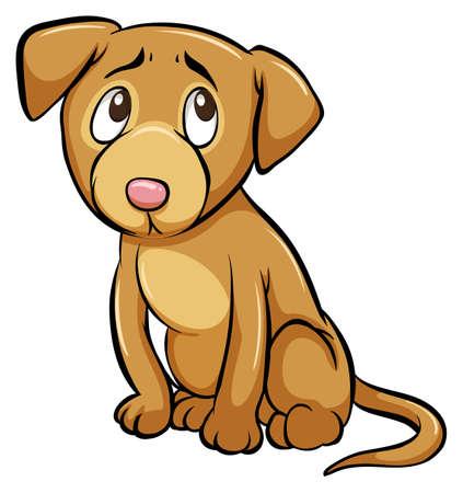 perro asustado: Un perro domesticado en un fondo blanco