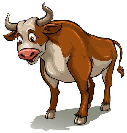 scientific farming: Bull on a white background