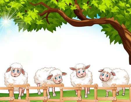 chordata: Four sheeps at the field