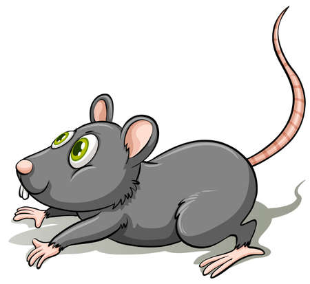 cartoon ear: A gray rat on a white background Illustration