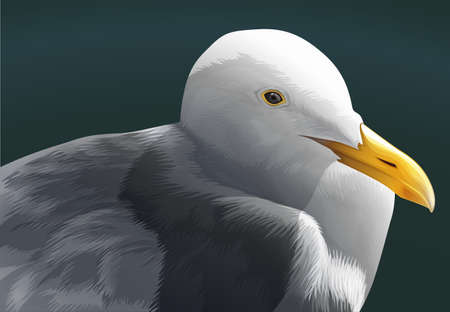 webbed: A fat seagull