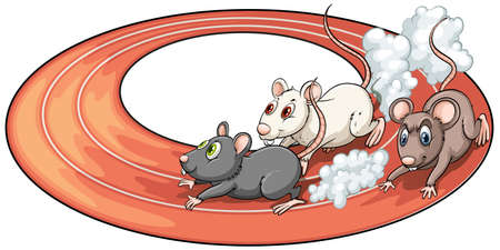 rat race: Three rats racing above at the back of a plate on a white background
