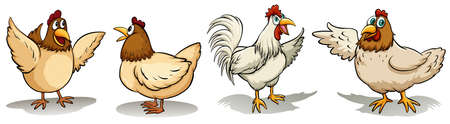 feathery: Hens and rooster on a white background Illustration