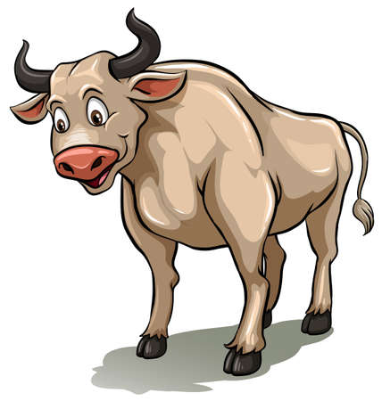 steer: One male cow standing on a white background