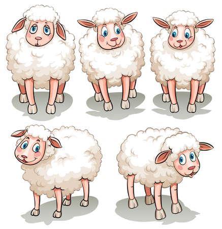 白い背景の上の 5 つの白い羊  イラスト・ベクター素材