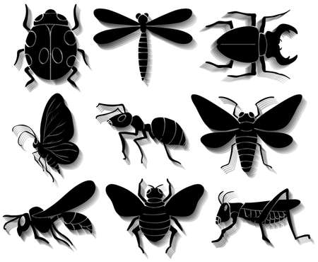 arthropoda: Set of insects in black colors on a white background