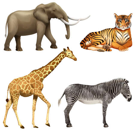 g giraffe: Four wild African animals on a white background Illustration