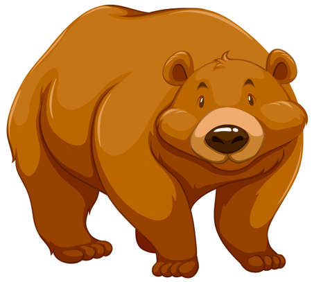 stocky: Big brown bear on a white background Illustration