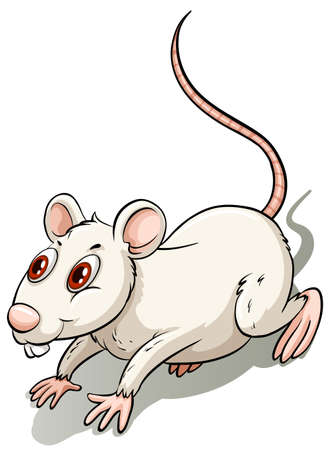 leftovers: White little rat on a white background