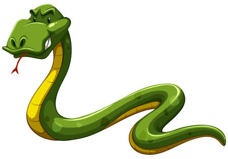ectothermic: Scary green snake on a white background