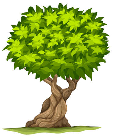 sturdy: Big old tree on a white background