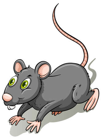 leftovers: One gray rat on a  white background