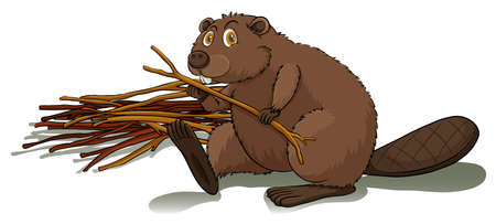 glands: Brown beaver holding a stick on a white background