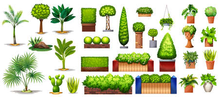 Different species of green plants on a white background
