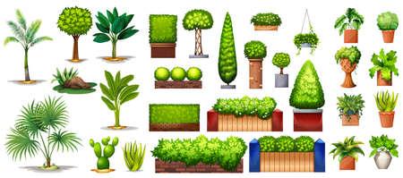 Pflanzen: Verschiedene Arten von grünen Pflanzen auf einem weißen Hintergrund