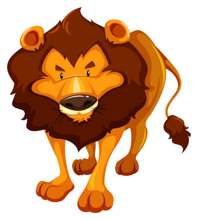 vulnerable: One dangerous lion on a white background Illustration