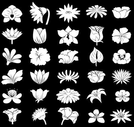 white orchids: Collection of different types of flowers Illustration