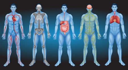 Interne organen van het menselijk lichaam Stock Illustratie