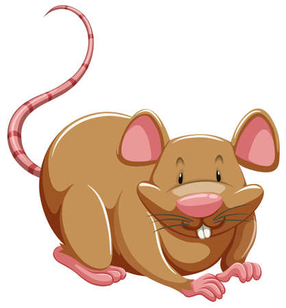 One brown rat on a white background