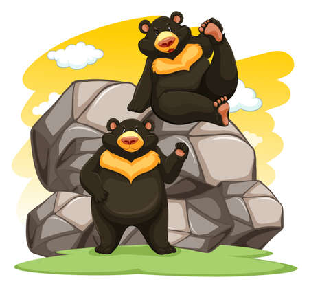 stocky: Two playful bears near the big rocks on a white background