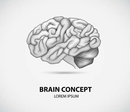 temporal: Concept of human brain Illustration