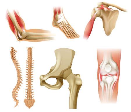 Různé lidské kosti na bílém pozadí