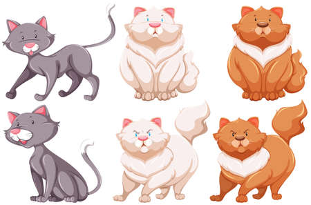 crepuscular: Six different specie of cats on a white background