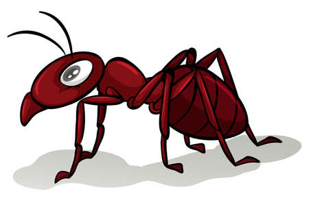crawling animal: One red ant on a white background